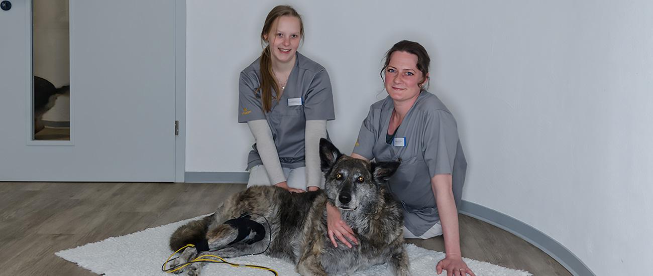Behandlung in der Kleintierpraxis Buscher